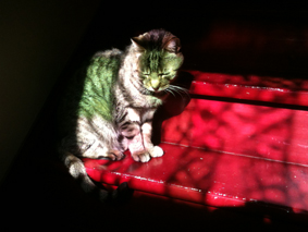 Kees in 't zonnetje op de trap